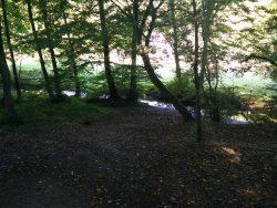 Ehrbachklamm: Erster Kontakt mit dem Wasser