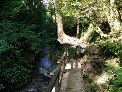 Ehrbachklamm: Baum ohne Richtung