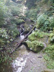Ehrbachklamm: Fließendes Wasser