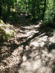 Ehrbachklamm: Weicher Waldweg