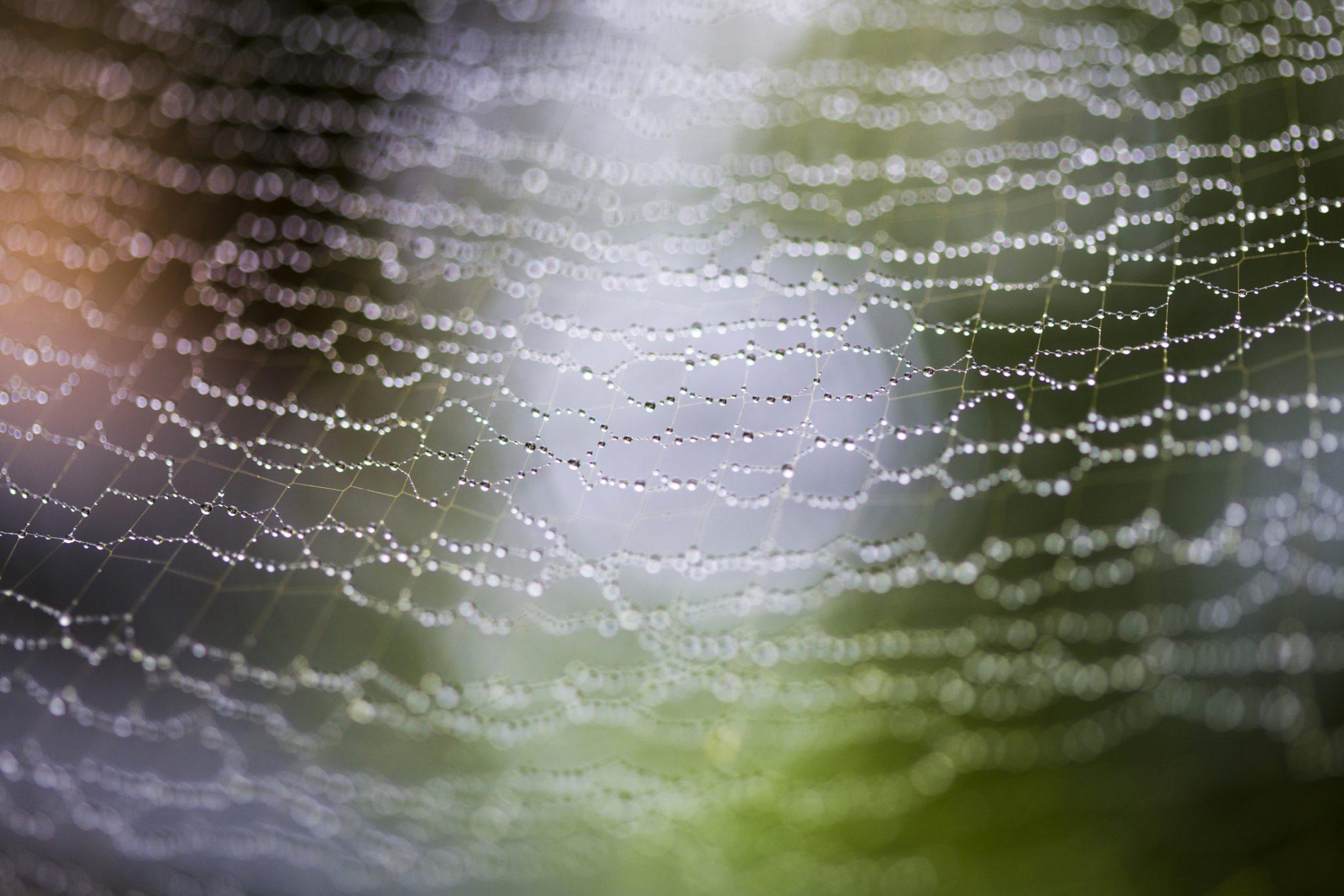 spinnennetz mit tau (unsplash.com)