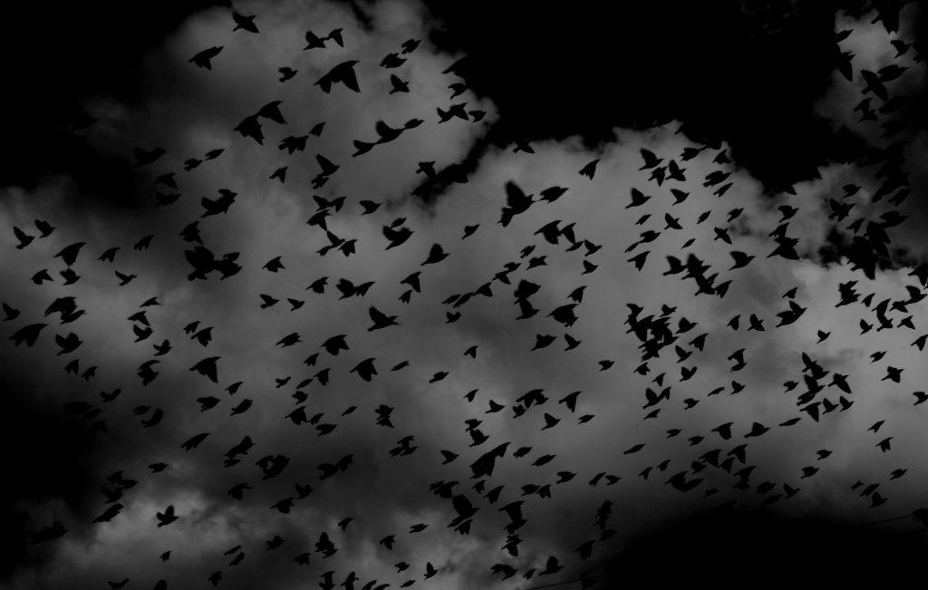 vögel sw (unsplash.com)