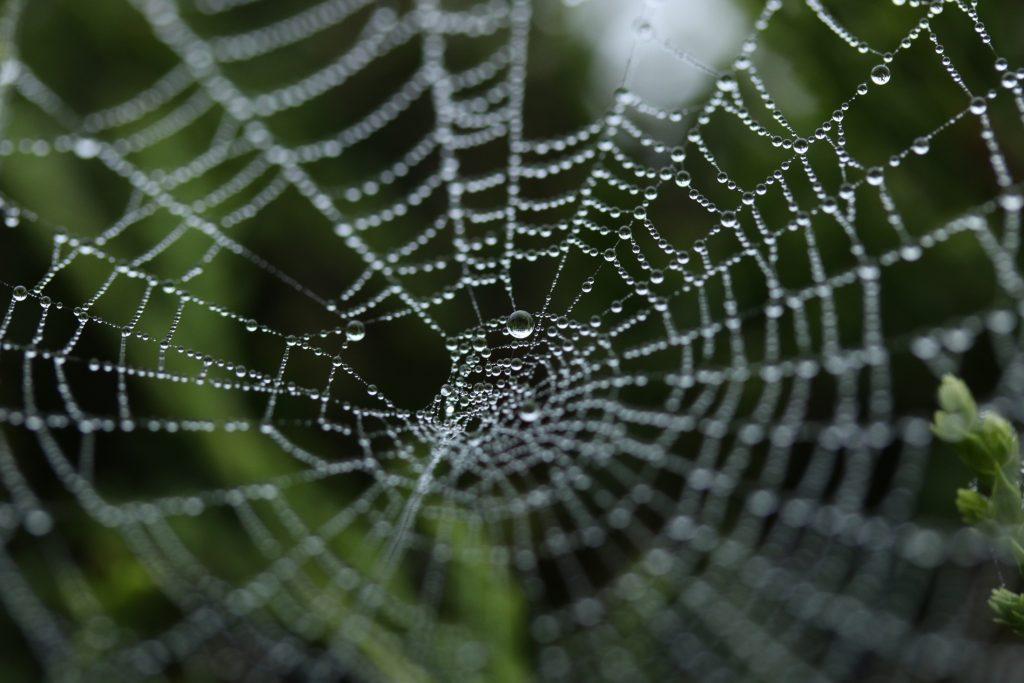 web (unsplash.com)