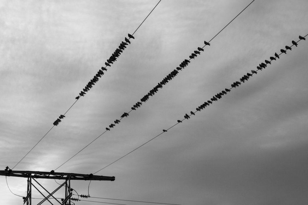 vögel auf leitung (unsplash.com)