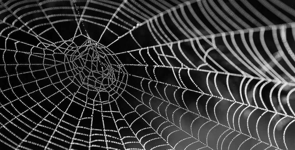 spinnennetz mit tau