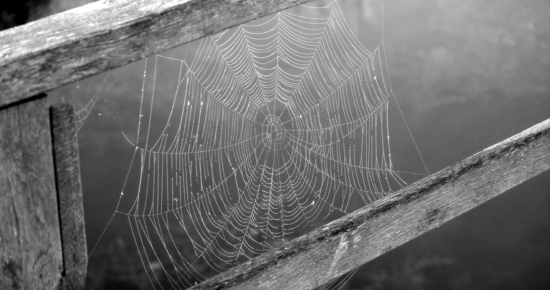 spinnweben zwischen holz, schwarz-weiß