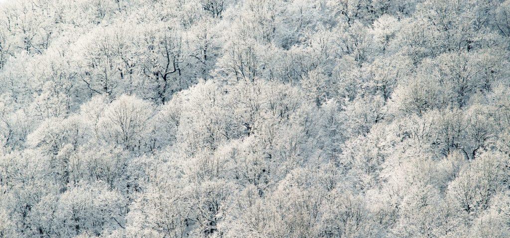 winterlicher wald im schnee