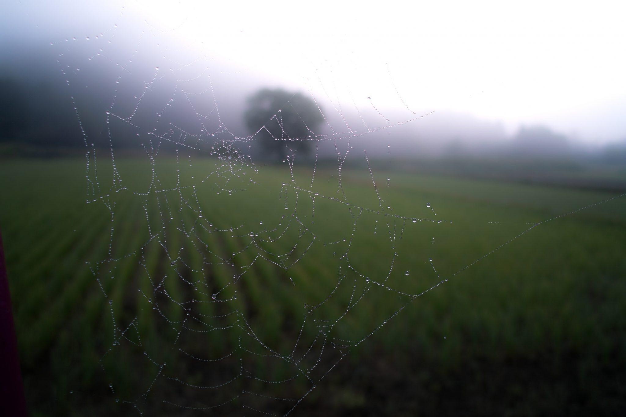spinnennetz vor natur