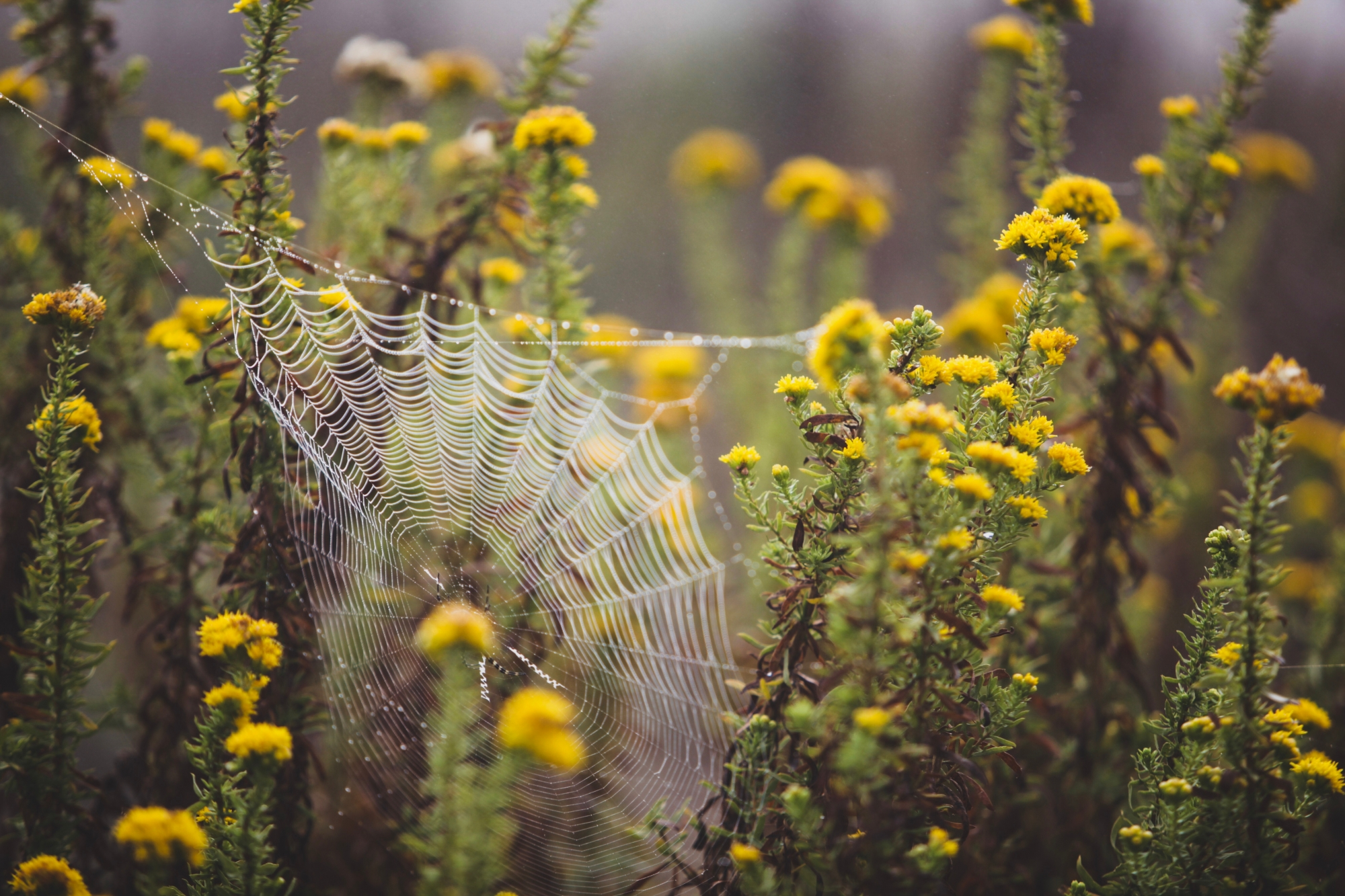 spinnennetz in blühpflanzen