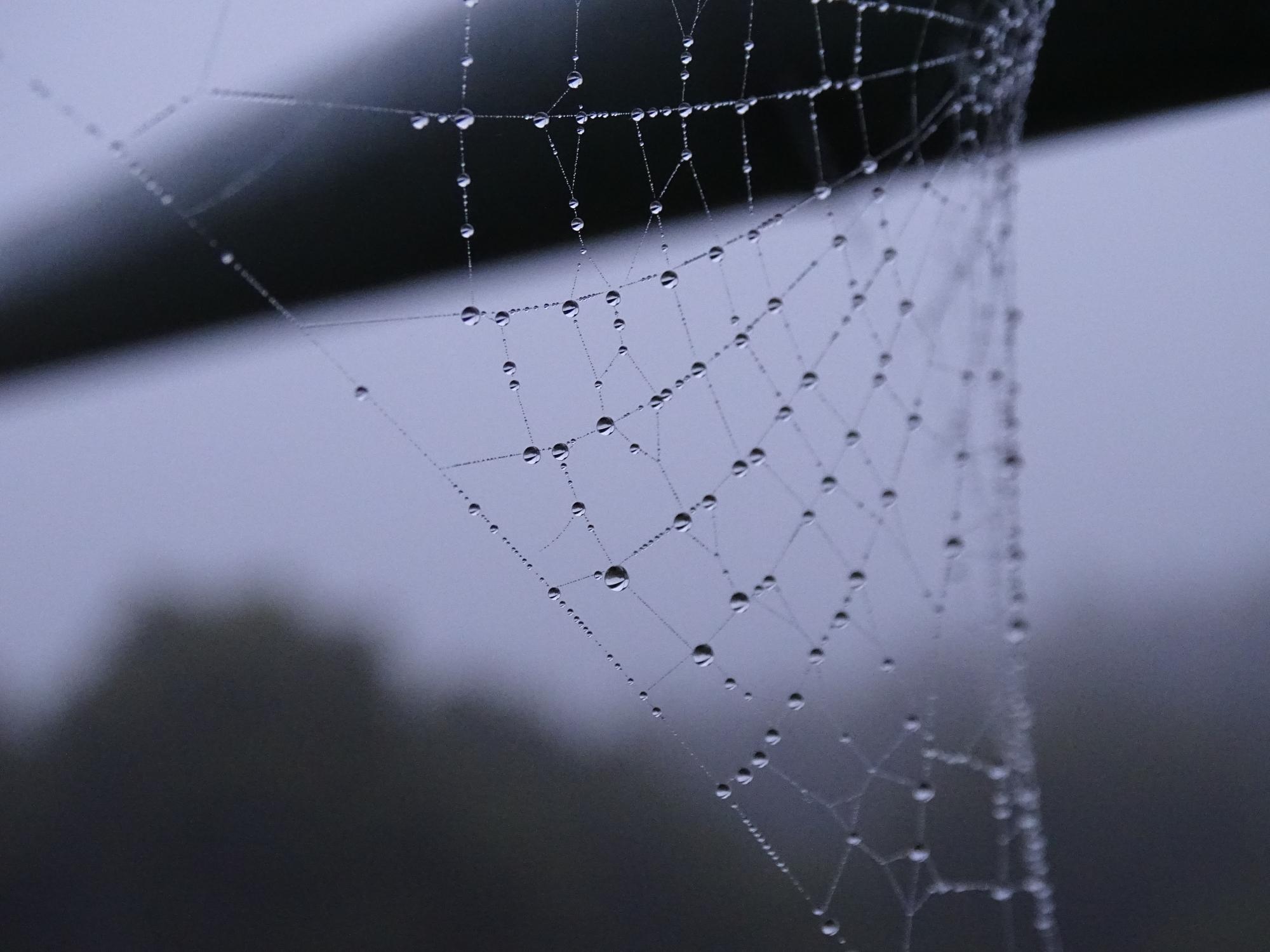 spinnennetz mit tautropfen