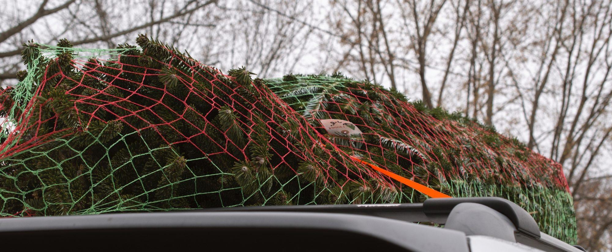 weihnachtsbaum im netz