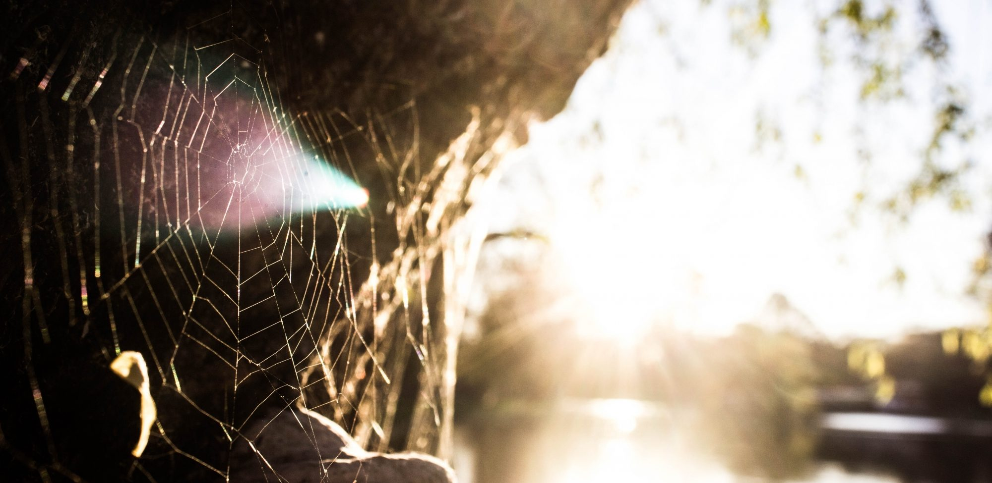 cobweb in sunlight